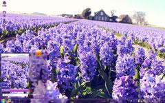 紫色花庄win7电脑主题