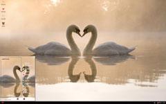 白天鹅有爱造型xp主题