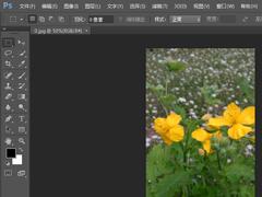 photoshop cs6如何一次打印多张照片?pscs6一次打印多张照片的方法